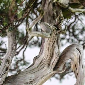 bonsai2 5 300x300 bonsai2 5   Image of bonsai2 5 300x300
