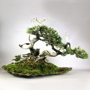 bonsai pot 1 39 300x300 Rock creations   rock shell   Image of bonsai pot 1 39 300x300